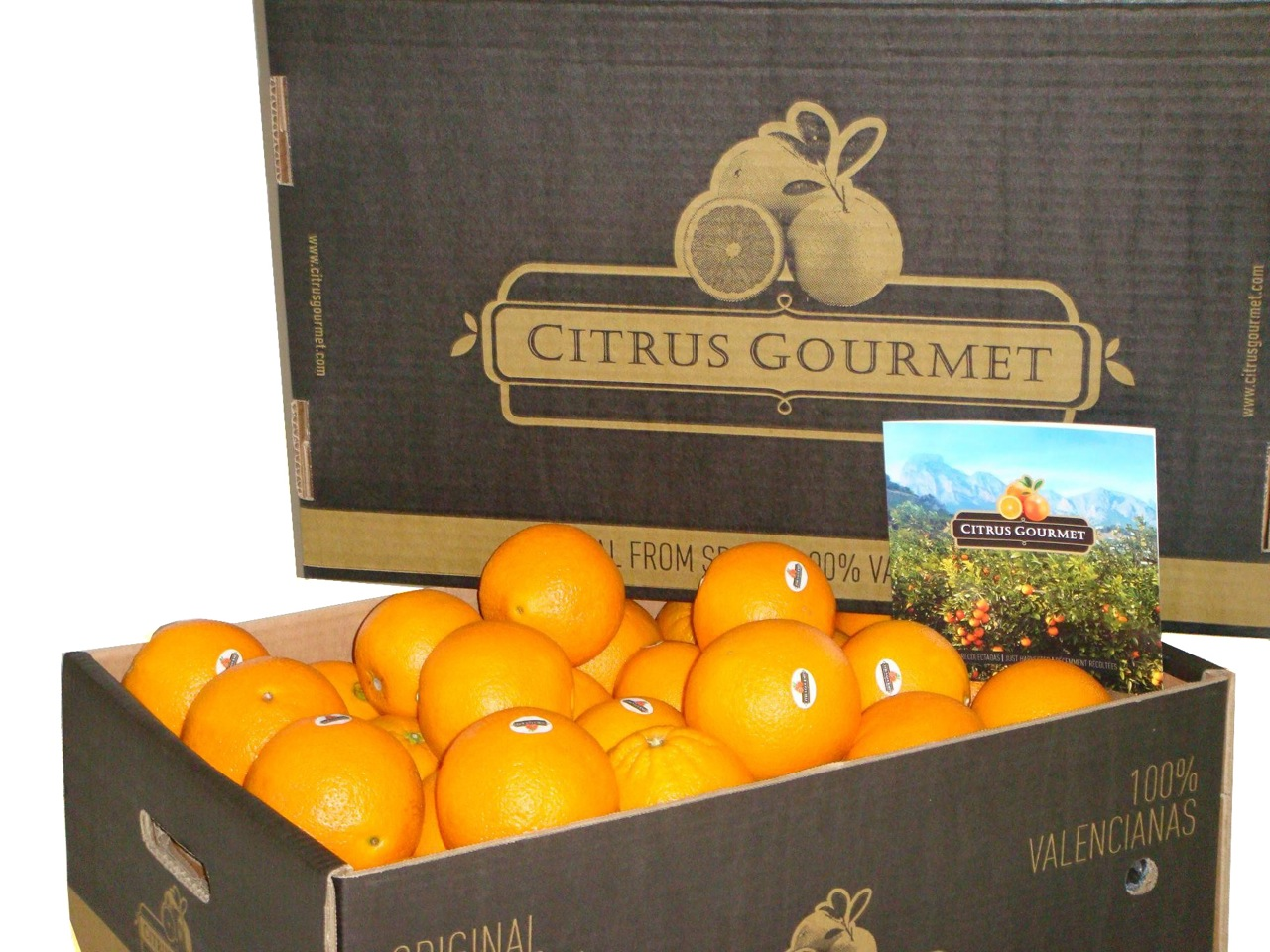 Apfelsinen aus Valencia von CitrusGourmet. Tafelapfelsinen Premium 15 kg