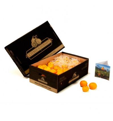 15 kg of Valencian CitrusGourmet Tangerines Premium