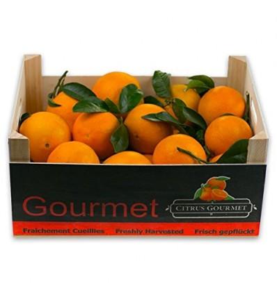 Naranjas Gourmet de Valencia Mesa 20 Kg por 23,99 €